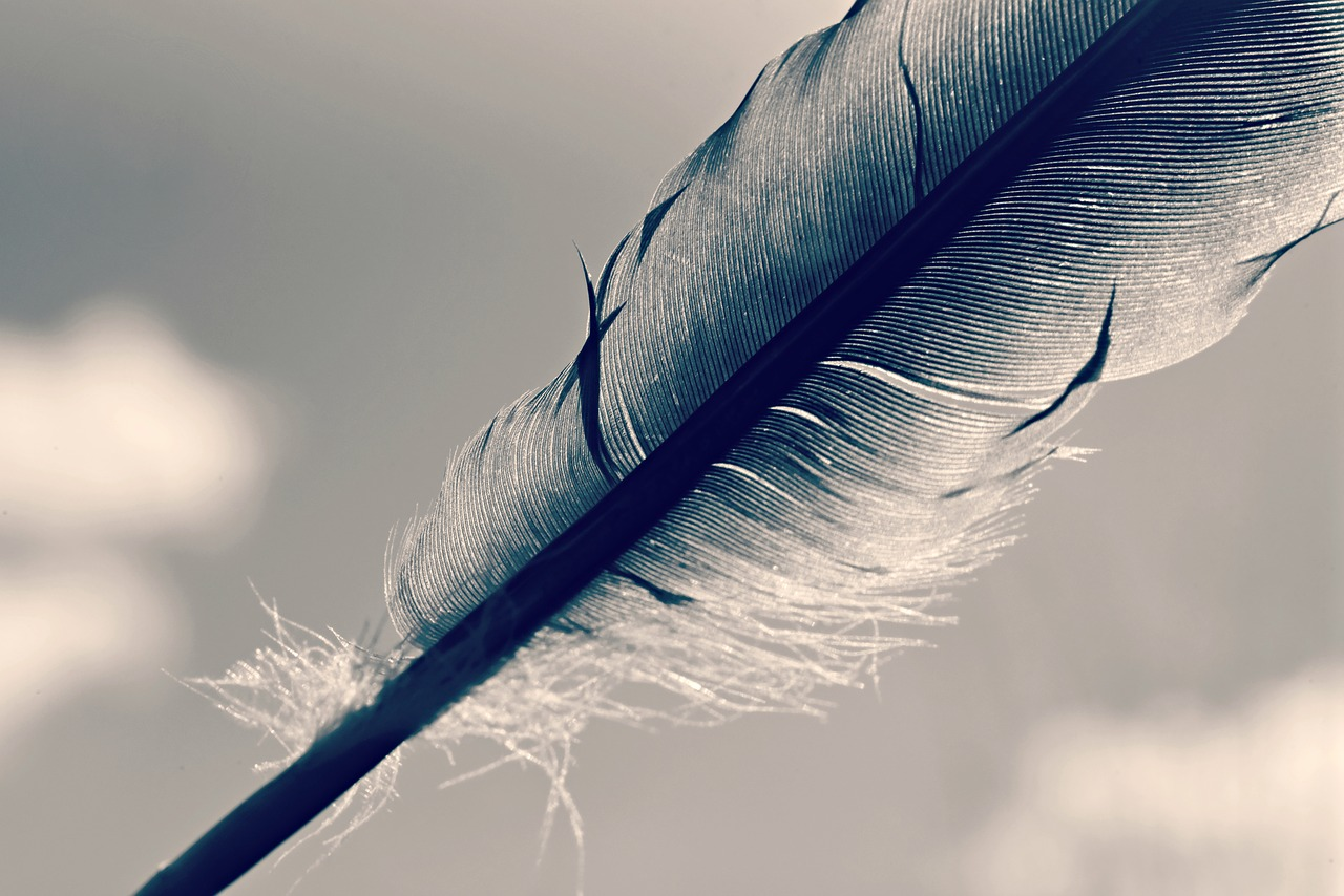 feather, quill, shaft